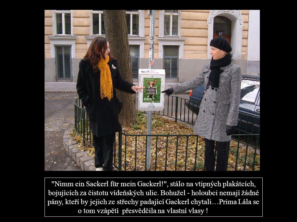 Nimm ein Sackerl für mein Gackerl! , stálo na vtipných plakátcích, bojujících za čistotu vídeňských ulic.