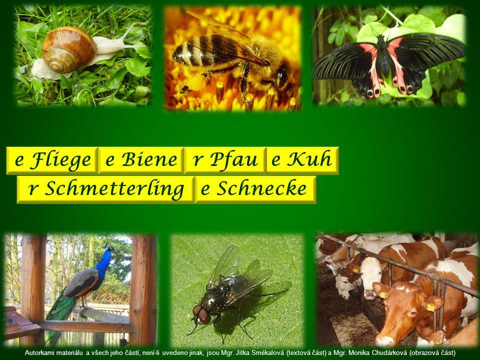 r Schmetterling e Fliege e Schnecke e Biene e Kuh r Pfau Autorkami materiálu a všech jeho částí, není-li uvedeno jinak, jsou Mgr.