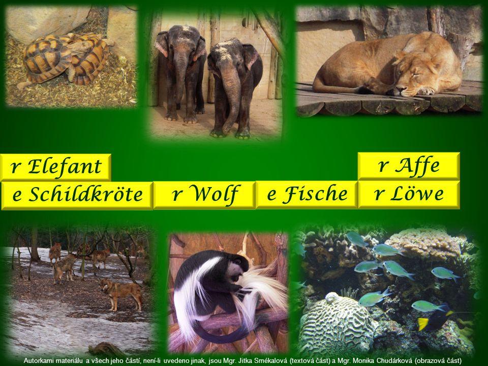 r Löwe r Elefant r Wolf e Schildkröte e Fische r Affe Autorkami materiálu a všech jeho částí, není-li uvedeno jinak, jsou Mgr.