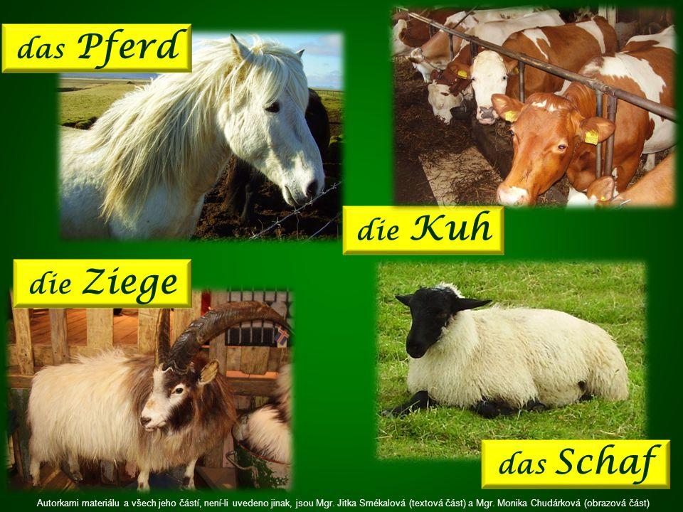 das Pferd die Kuh die Ziege das Schaf Autorkami materiálu a všech jeho částí, není-li uvedeno jinak, jsou Mgr.