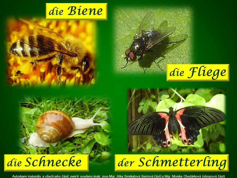 der Schmetterling die Fliege die Schnecke die Biene Autorkami materiálu a všech jeho částí, není-li uvedeno jinak, jsou Mgr.