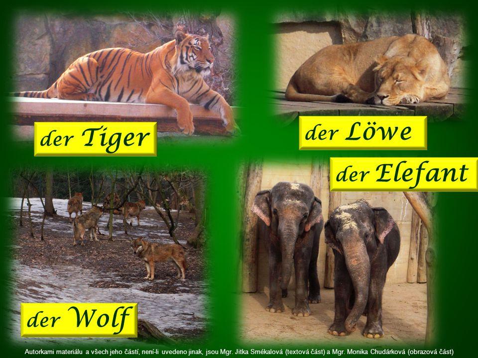 der Löwe der Tiger der Elefant der Wolf Autorkami materiálu a všech jeho částí, není-li uvedeno jinak, jsou Mgr.