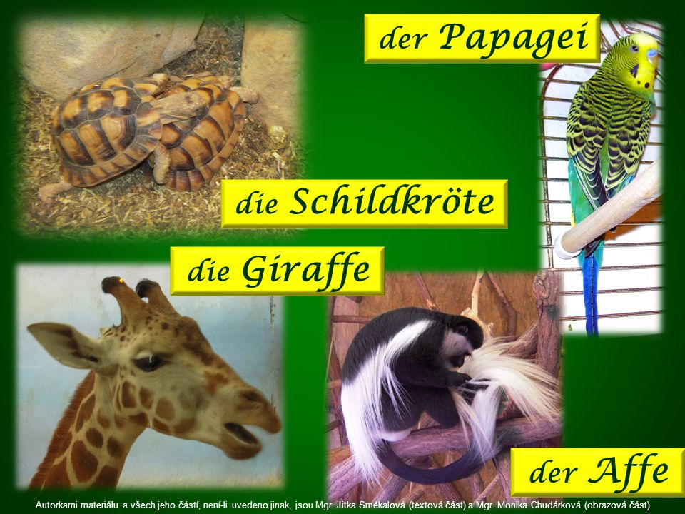 die Schildkröte der Papagei der Affe die Giraffe Autorkami materiálu a všech jeho částí, není-li uvedeno jinak, jsou Mgr.