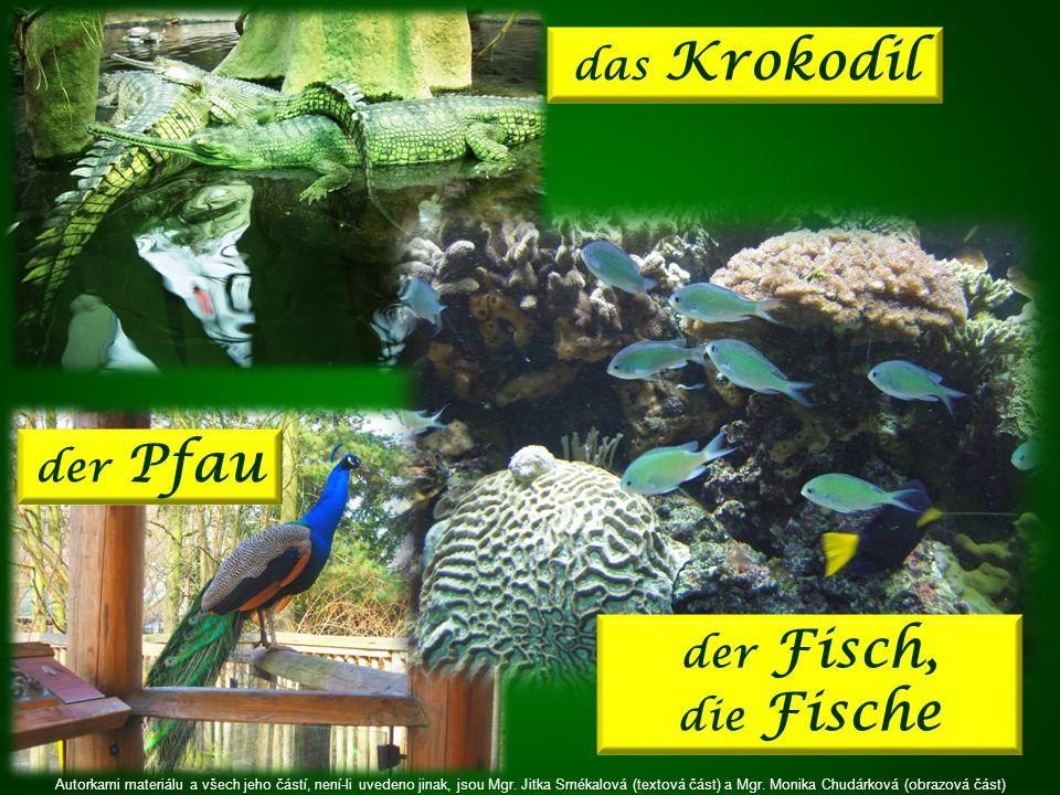 der Fisch, die Fische der Pfau das Krokodil Autorkami materiálu a všech jeho částí, není-li uvedeno jinak, jsou Mgr.