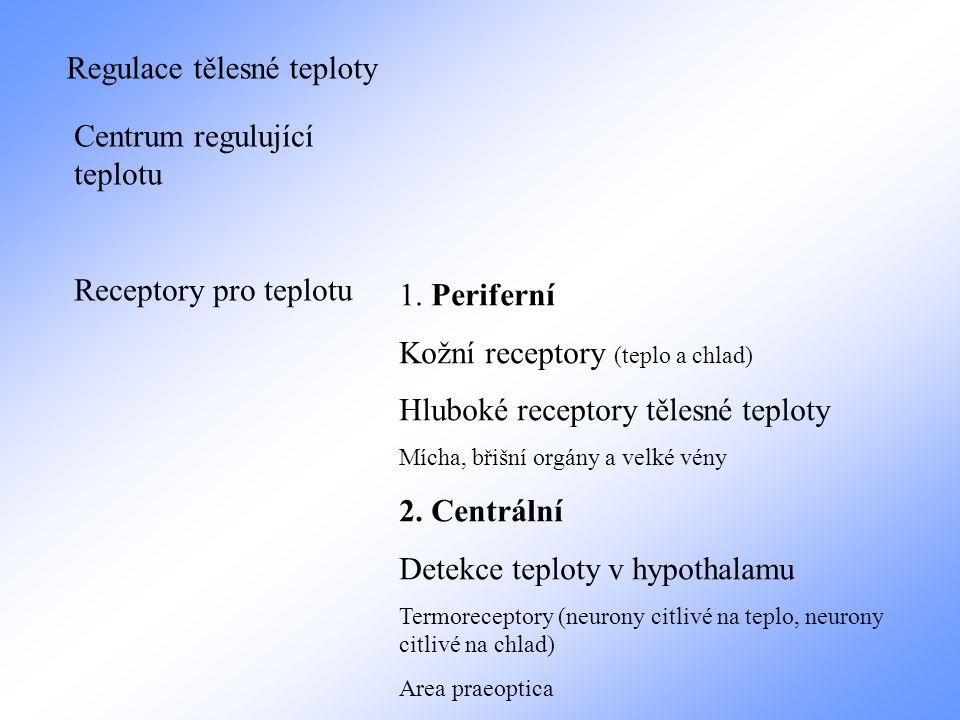 Regulace tělesné teploty Centrum regulující teplotu Receptory pro teplotu 1. Periferní Kožní receptory (teplo a chlad) Hluboké receptory tělesné teplo
