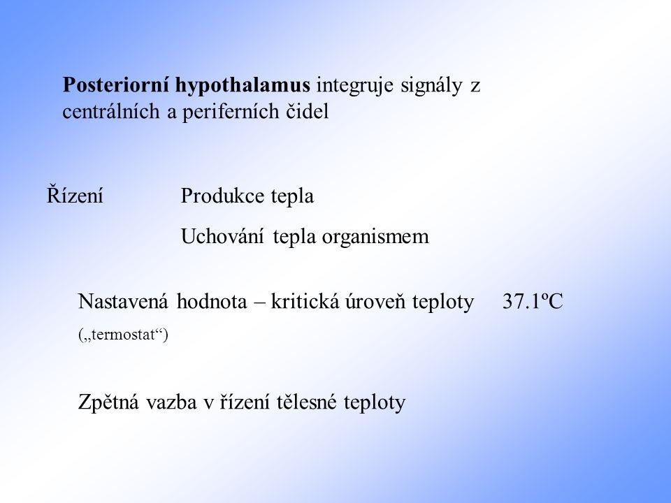 Posteriorní hypothalamus integruje signály z centrálních a periferních čidel ŘízeníProdukce tepla Uchování tepla organismem Nastavená hodnota – kritic