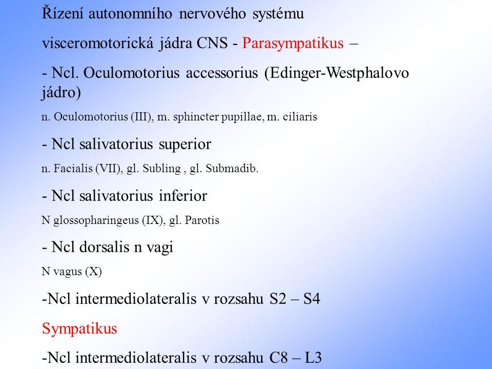 visceromotorická jádra CNS - Parasympatikus – - Ncl. Oculomotorius accessorius (Edinger-Westphalovo jádro) n. Oculomotorius (III), m. sphincter pupill