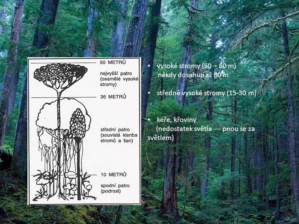 vysoké stromy (50 – 60 m) někdy dosahují až 80 m středně vysoké stromy (15-30 m) keře, křoviny (nedostatek světla  pnou se za světlem)