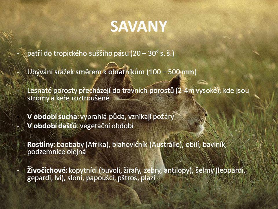 SAVANY -patří do tropického suššího pásu (20 – 30° s. š.) -Ubývání srážek směrem k obratníkům (100 – 500 mm) -Lesnaté porosty přecházejí do travních p