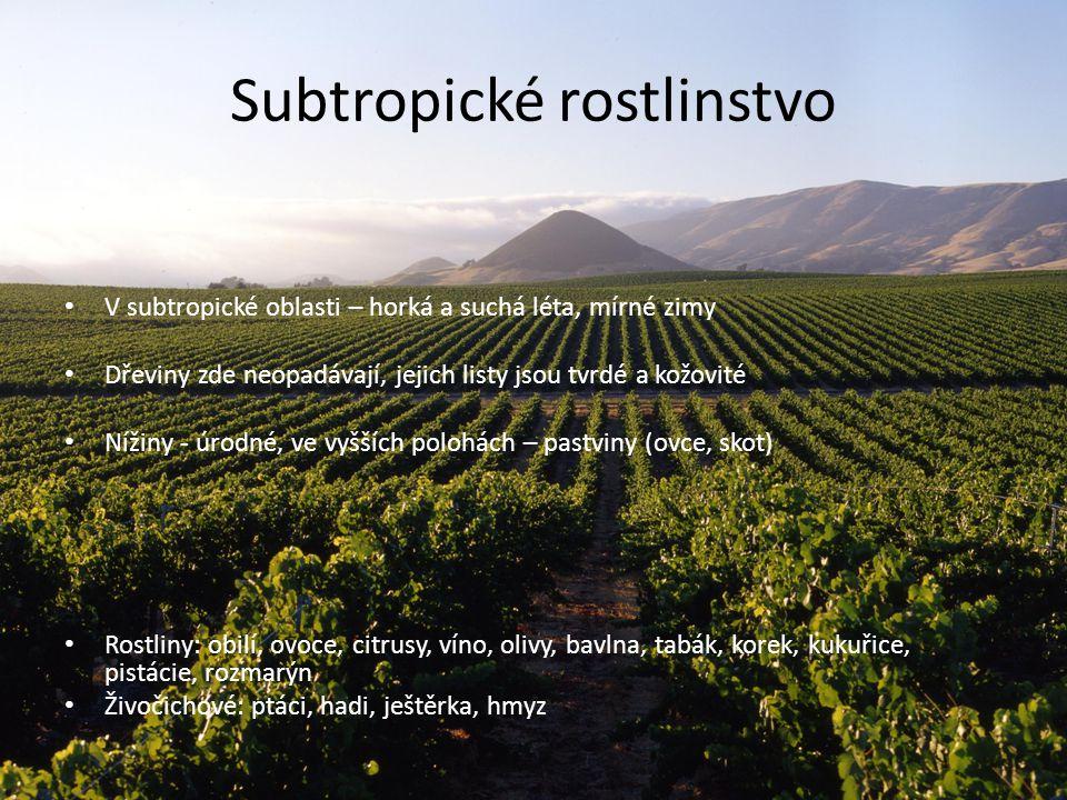 Subtropické rostlinstvo V subtropické oblasti – horká a suchá léta, mírné zimy Dřeviny zde neopadávají, jejich listy jsou tvrdé a kožovité Nížiny - úr