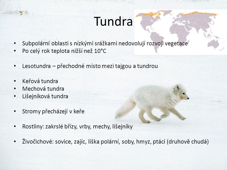 Tundra Subpolární oblasti s nízkými srážkami nedovolují rozvoji vegetace Po celý rok teplota nižší než 10°C Lesotundra – přechodné místo mezi tajgou a