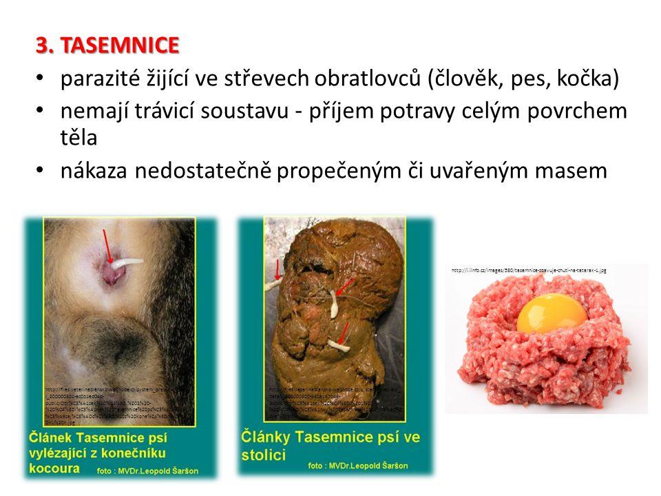 3. TASEMNICE parazité žijící ve střevech obratlovců (člověk, pes, kočka) nemají trávicí soustavu - příjem potravy celým povrchem těla nákaza nedostate