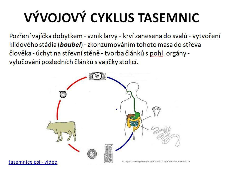 tasemnice psí - video http://gymtri.trinec.org/soubory/Biologie/3-rocnik/zoologie/tasemnice-bezbr-cyklus.JPG