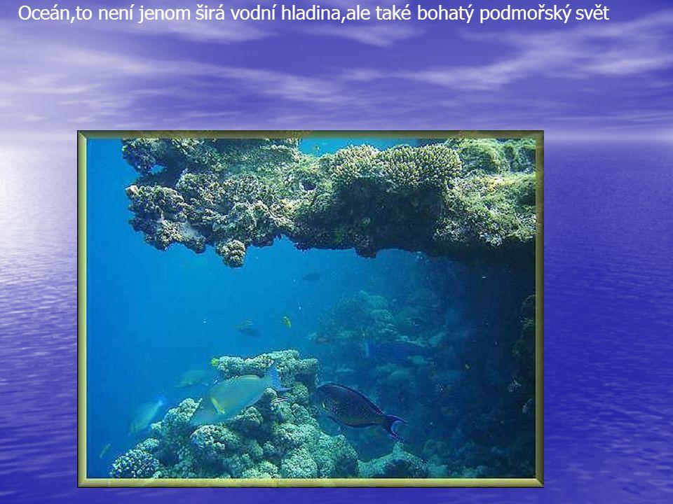Oceán,to není jenom širá vodní hladina,ale také bohatý podmořský svět