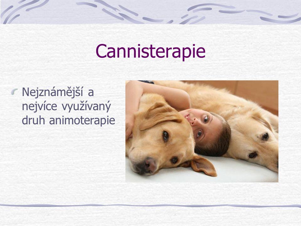 Cannisterapie Nejznámější a nejvíce využívaný druh animoterapie