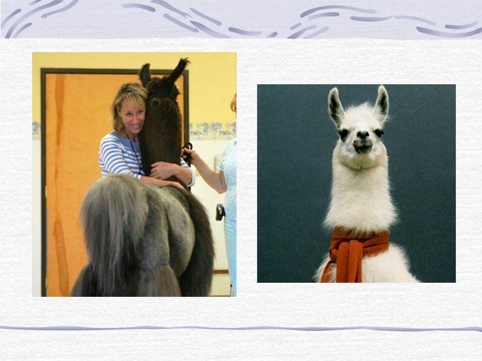 Druhy animoterapie Malá domácí zvířata Hospodářská zvířata Volně žijící zvířata Exotická zvířata v zoo