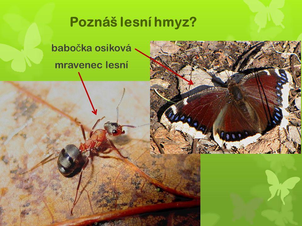 Poznáš lesní hmyz? babo č ka osiková mravenec lesní