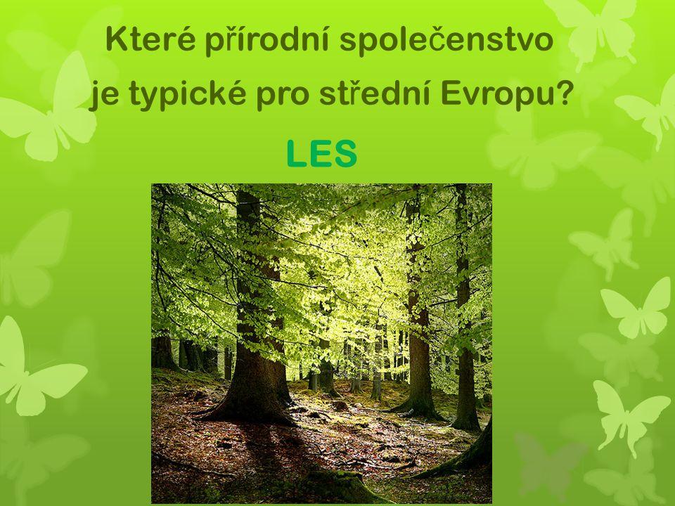 LES Které p ř írodní spole č enstvo je typické pro st ř ední Evropu?