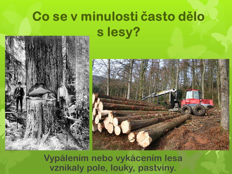 Co se v minulosti č asto d ě lo s lesy? Vypálením nebo vykácením lesa vznikaly pole, louky, pastviny.