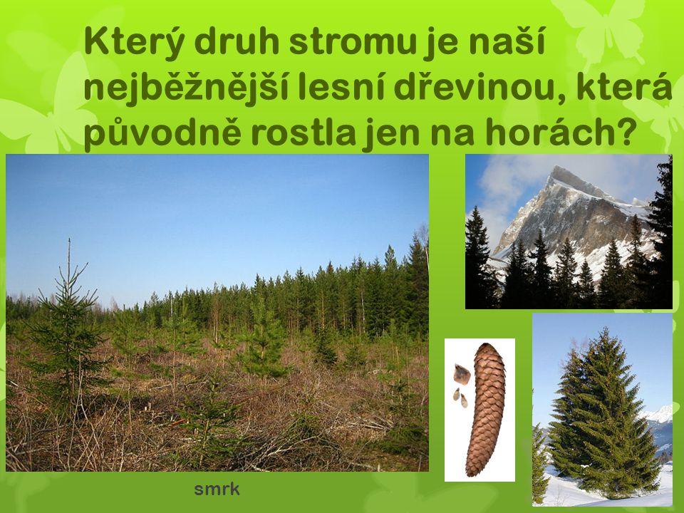 Který druh stromu je naší nejb ěž n ě jší lesní d ř evinou, která p ů vodn ě rostla jen na horách? smrk