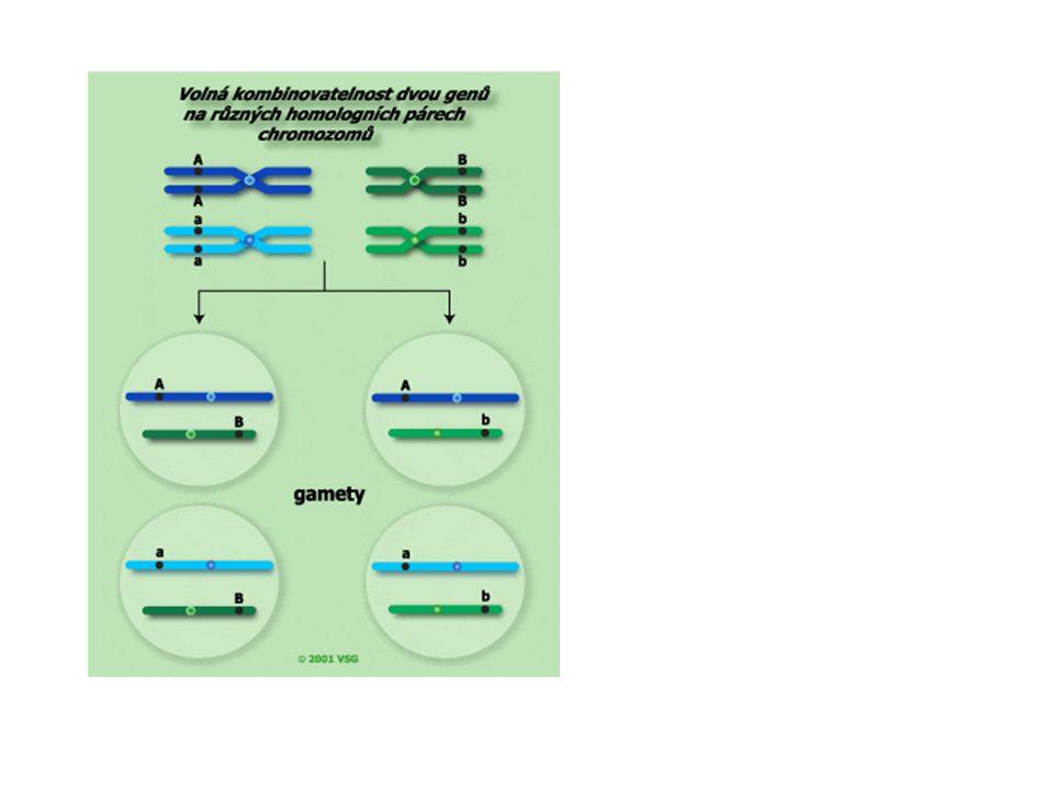 Kontrolní otázky 1 Kdo první posal vazby genů.T.H.Morgan.