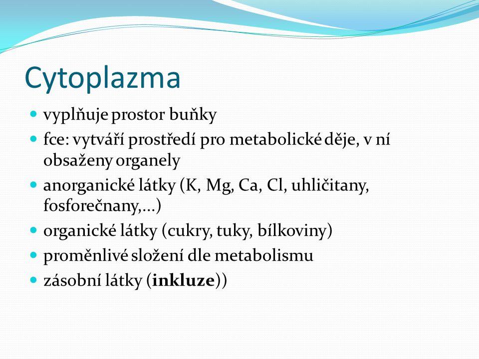 Cytoplazma vyplňuje prostor buňky fce: vytváří prostředí pro metabolické děje, v ní obsaženy organely anorganické látky (K, Mg, Ca, Cl, uhličitany, fo