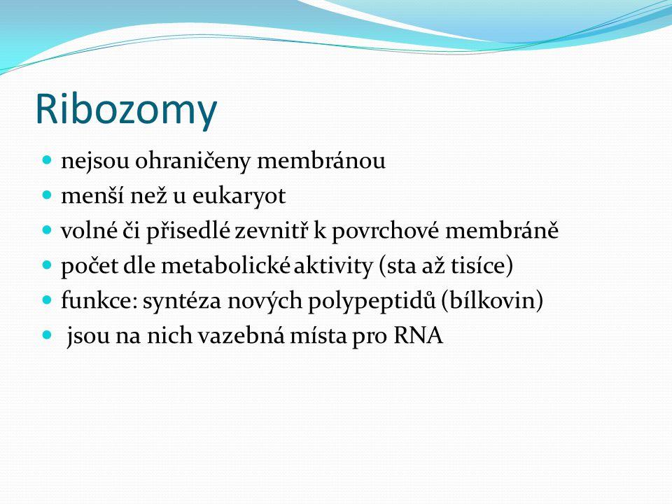 Ribozomy nejsou ohraničeny membránou menší než u eukaryot volné či přisedlé zevnitř k povrchové membráně počet dle metabolické aktivity (sta až tisíce