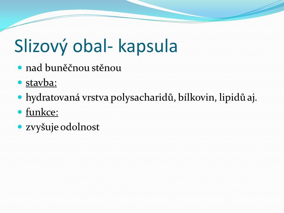 Slizový obal- kapsula nad buněčnou stěnou stavba: hydratovaná vrstva polysacharidů, bílkovin, lipidů aj. funkce: zvyšuje odolnost
