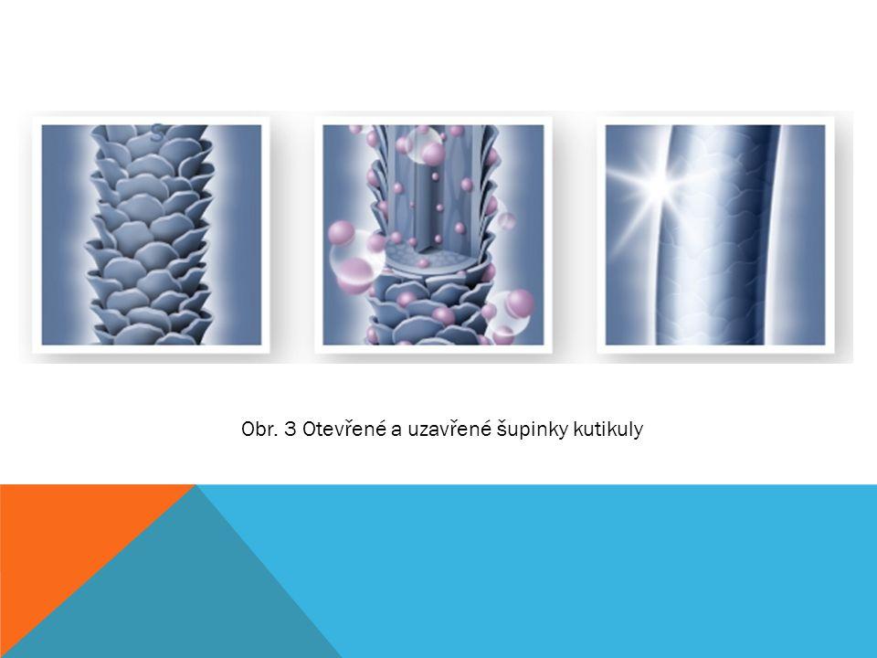 Obr. 3 Otevřené a uzavřené šupinky kutikuly
