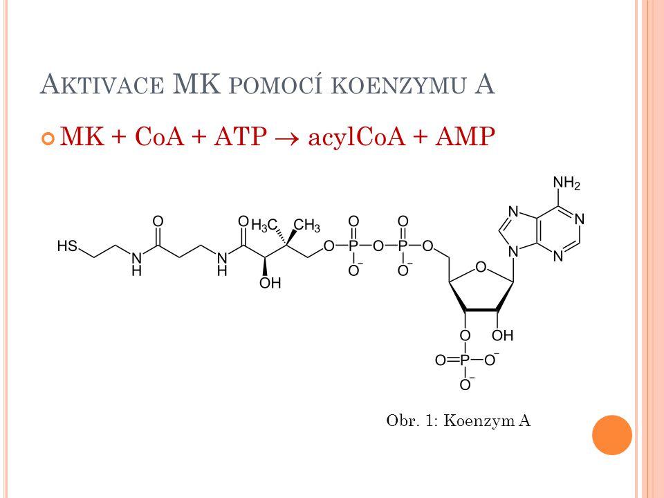 T RANSPORT MK DO MITOCHONDRIE POMOCÍ KARNITINU Mastná kyselina je přenášena ve formě acylkarnitinu Obr.