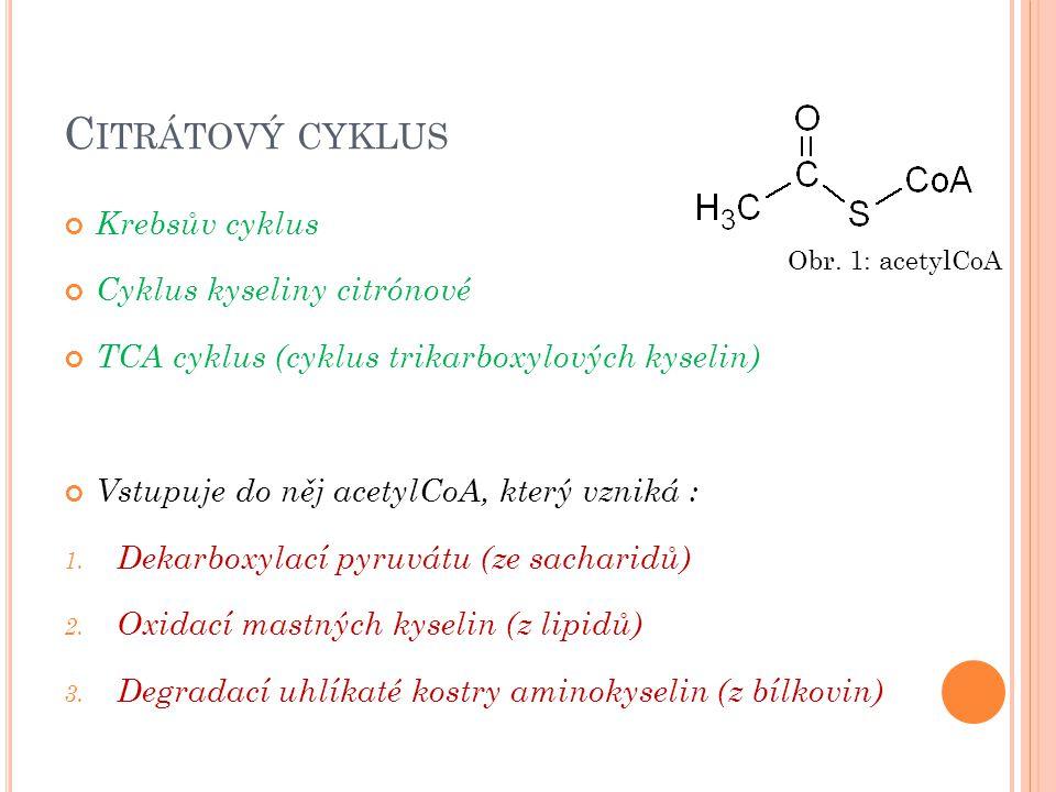 Krebsův cyklus Cyklus kyseliny citrónové TCA cyklus (cyklus trikarboxylových kyselin) Vstupuje do něj acetylCoA, který vzniká : 1. Dekarboxylací pyruv