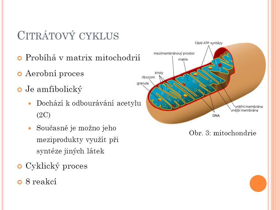 C ITRÁTOVÝ CYKLUS Probíhá v matrix mitochodrií Aerobní proces Je amfibolický Dochází k odbourávání acetylu (2C) Současně je možno jeho meziprodukty vy