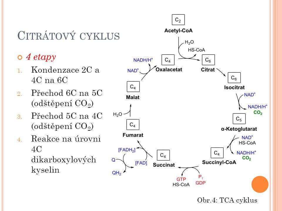 C ITRÁTOVÝ CYKLUS 4 etapy 1. Kondenzace 2C a 4C na 6C 2. Přechod 6C na 5C (odštěpení CO 2 ) 3. Přechod 5C na 4C (odštěpení CO 2 ) 4. Reakce na úrovni