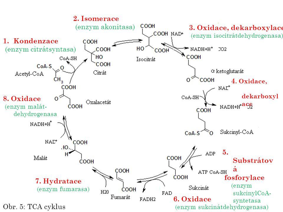 1.Kondenzace (enzym citrátsyntasa) 2. Isomerace (enzym akonitasa) 3. Oxidace, dekarboxylace (enzym isocitrátdehydrogenasa) 4. Oxidace, dekarboxyl ace
