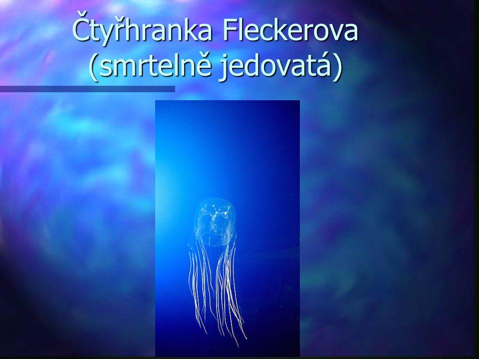 Čtyřhranka Fleckerova (smrtelně jedovatá)