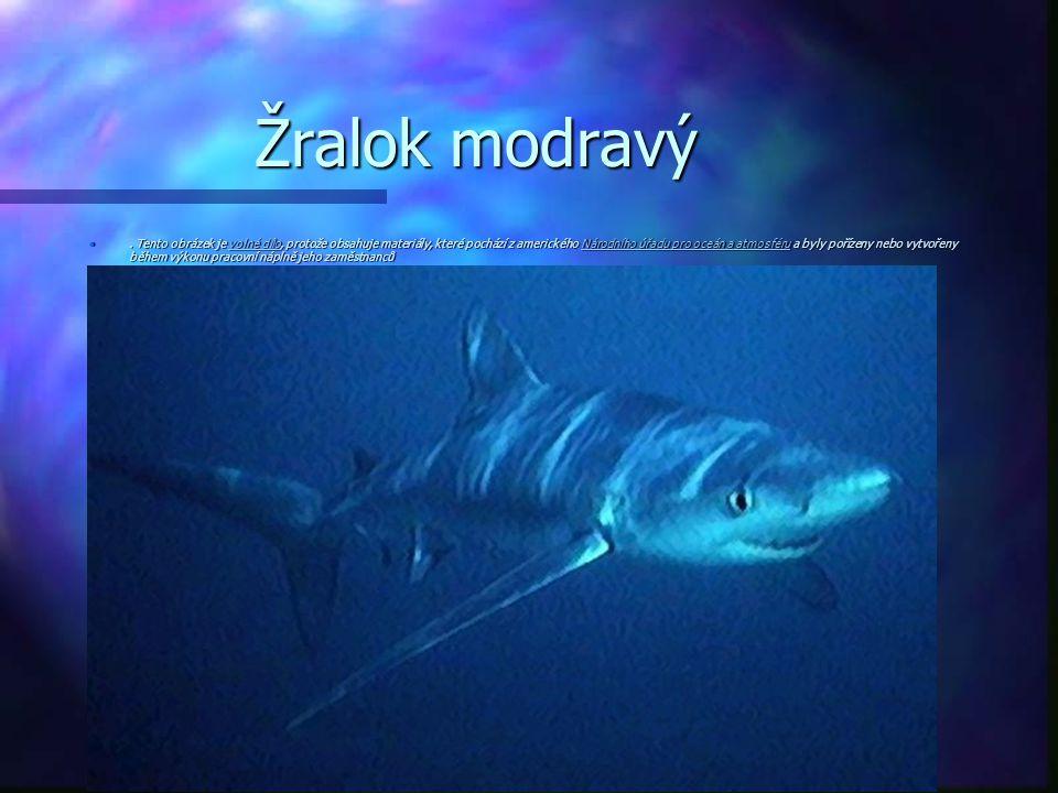 Žralok modravý. Tento obrázek je volné dílo, protože obsahuje materiály, které pochází z amerického Národního úřadu pro oceán a atmosféru a byly poříz