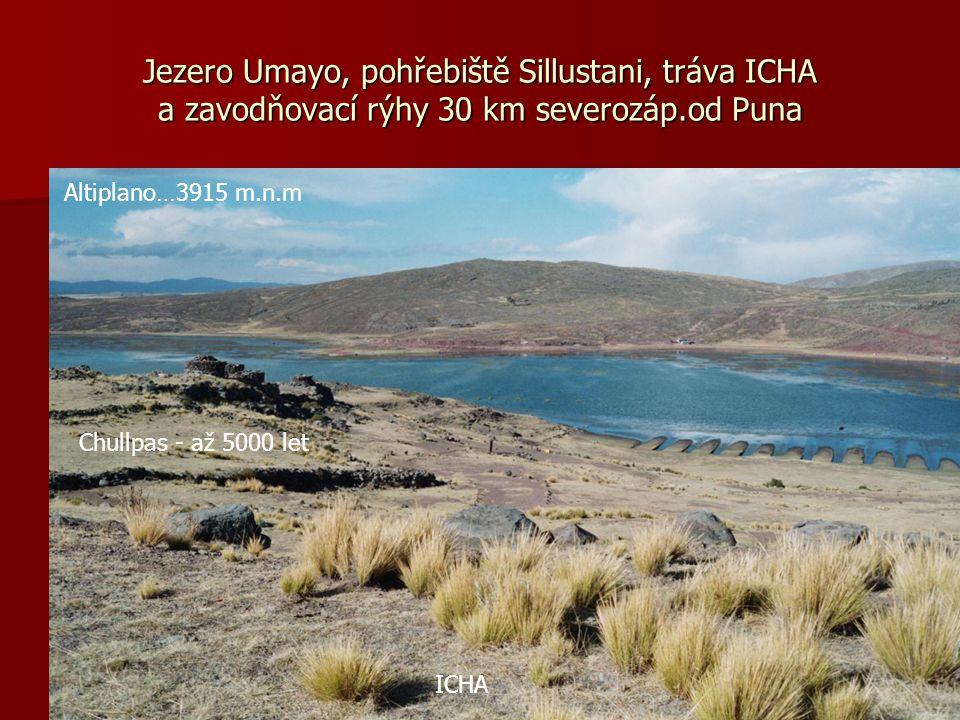 Totora, pejerey, čluny na plovoucích ostrovech Uros 40 ostrovů na ploše 8500 km² (3860 m.n.m.)Pejerey je druh sardele
