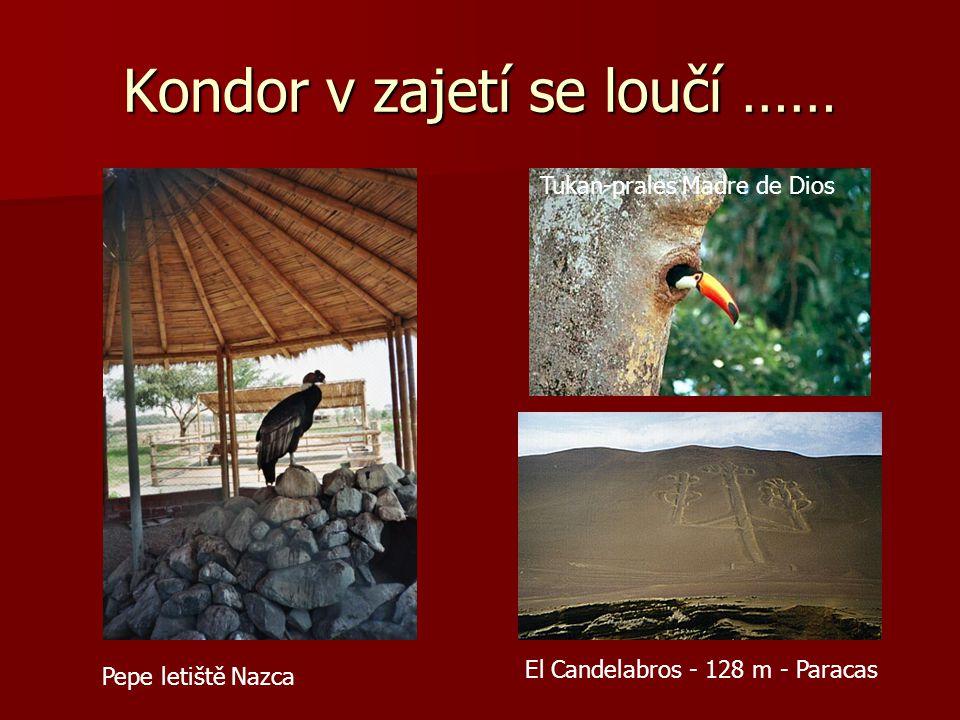 Ostrovy Ballestas a planina Nazca Lvoun a guano Kolibřík Člověk? Tučňák 250m 29 m