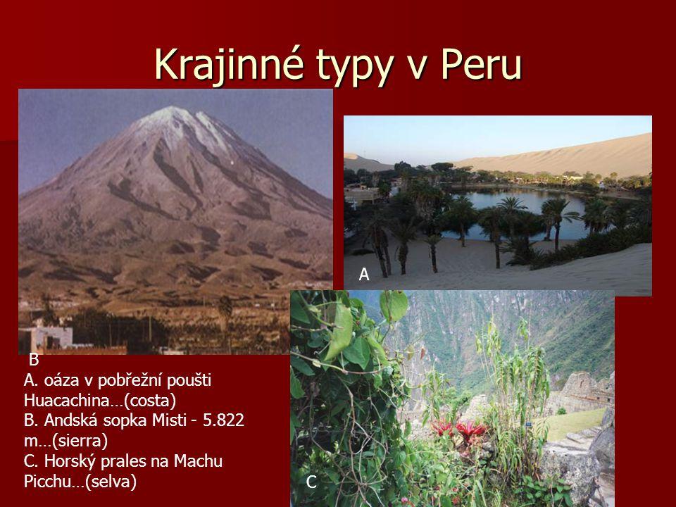 Ideální podmínky k životu lamy jsou ve vegetačním pásmu: A) B) nebo C) ? Lama alpaka Lama krotká Lama vikuňaLama guanaco