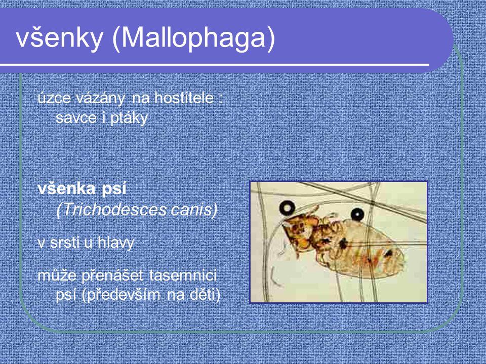 všenky (Mallophaga) úzce vázány na hostitele : savce i ptáky všenka psí (Trichodesces canis) v srsti u hlavy může přenášet tasemnici psí (především na děti)