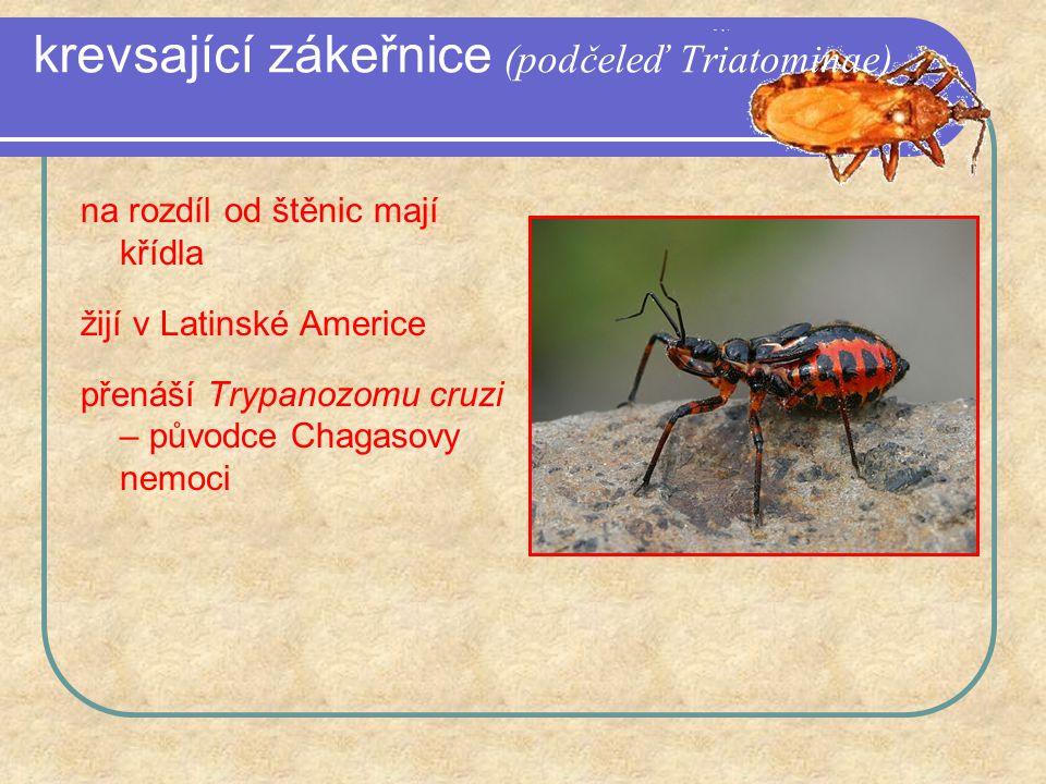 krevsající zákeřnice (podčeleď Triatominae) na rozdíl od štěnic mají křídla žijí v Latinské Americe přenáší Trypanozomu cruzi – původce Chagasovy nemoci
