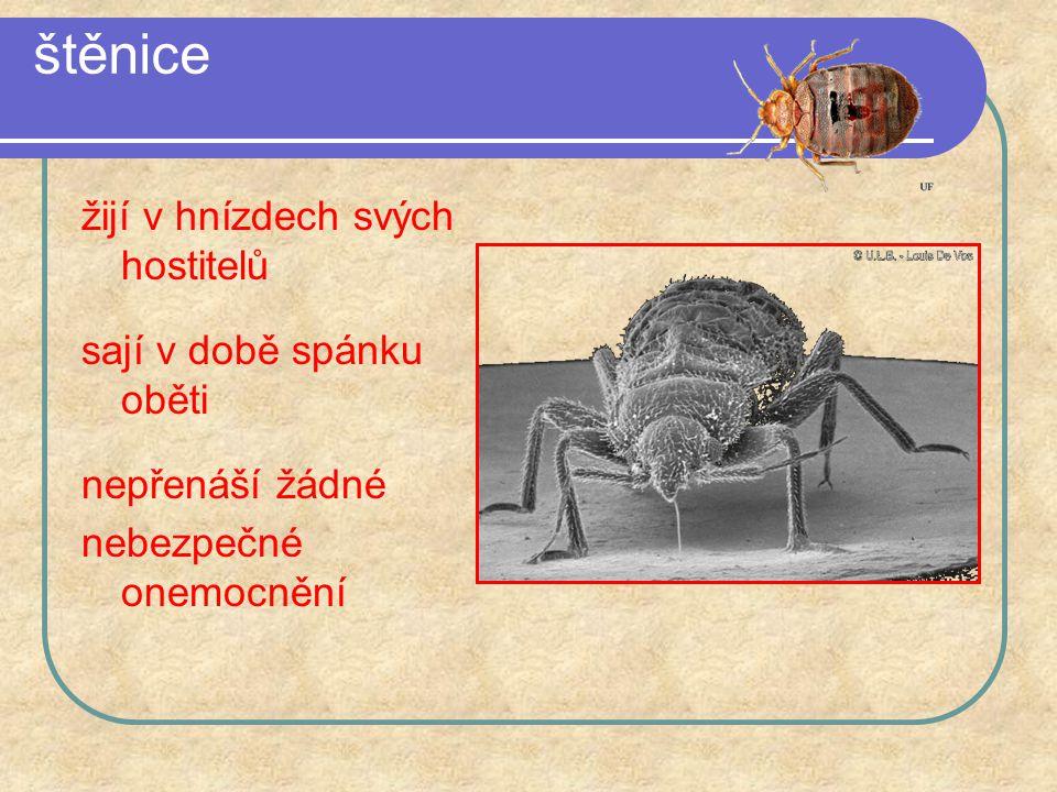 štěnice žijí v hnízdech svých hostitelů sají v době spánku oběti nepřenáší žádné nebezpečné onemocnění