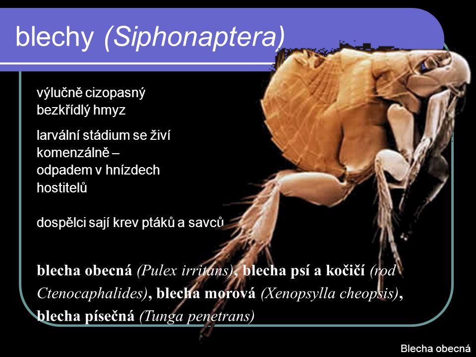 blechy (Siphonaptera) výlučně cizopasný bezkřídlý hmyz larvální stádium se živí komenzálně – odpadem v hnízdech hostitelů dospělci sají krev ptáků a savců blecha obecná (Pulex irritans), blecha psí a kočičí (rod Ctenocaphalides), blecha morová (Xenopsylla cheopsis), blecha písečná (Tunga penetrans) Blecha obecná
