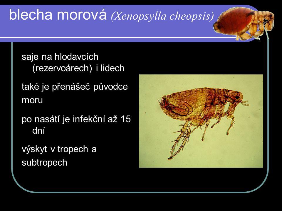 blecha morová (Xenopsylla cheopsis) saje na hlodavcích (rezervoárech) i lidech také je přenášeč původce moru po nasátí je infekční až 15 dní výskyt v tropech a subtropech