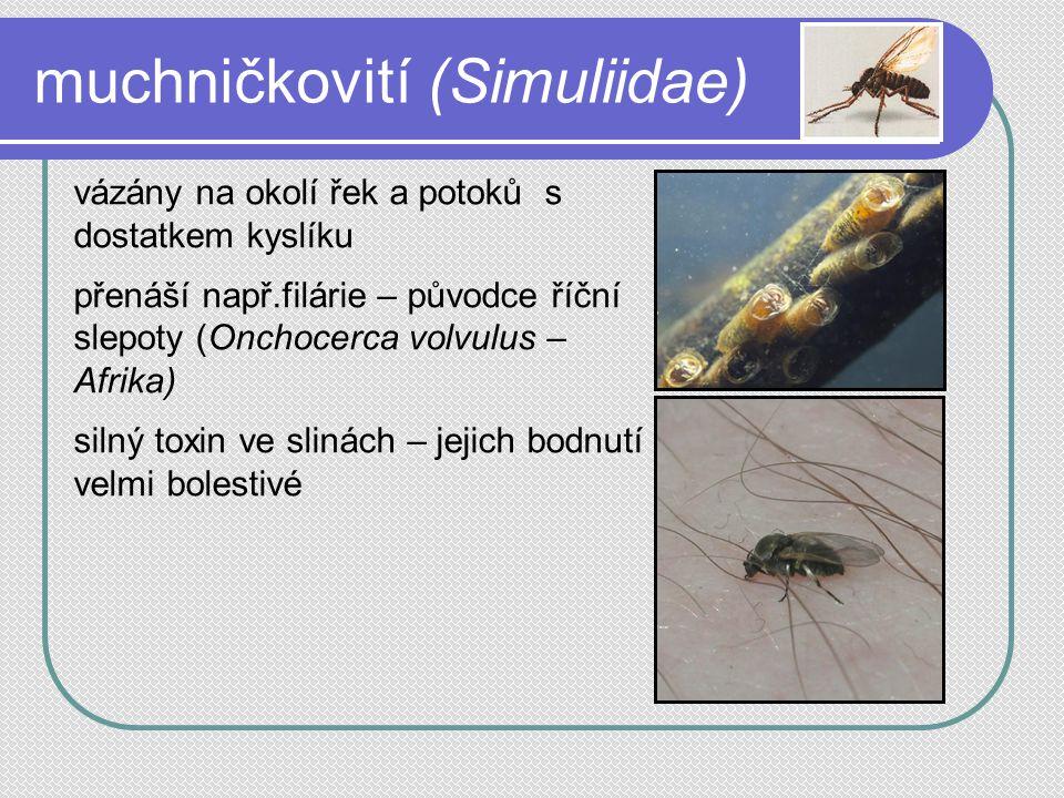 muchničkovití (Simuliidae) vázány na okolí řek a potoků s dostatkem kyslíku přenáší např.filárie – původce říční slepoty (Onchocerca volvulus – Afrika) silný toxin ve slinách – jejich bodnutí velmi bolestivé