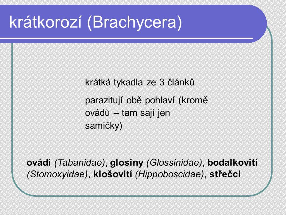 krátkorozí (Brachycera) krátká tykadla ze 3 článků parazitují obě pohlaví (kromě ovádů – tam sají jen samičky) ovádi (Tabanidae), glosiny (Glossinidae), bodalkovití (Stomoxyidae), klošovití (Hippoboscidae), střečci