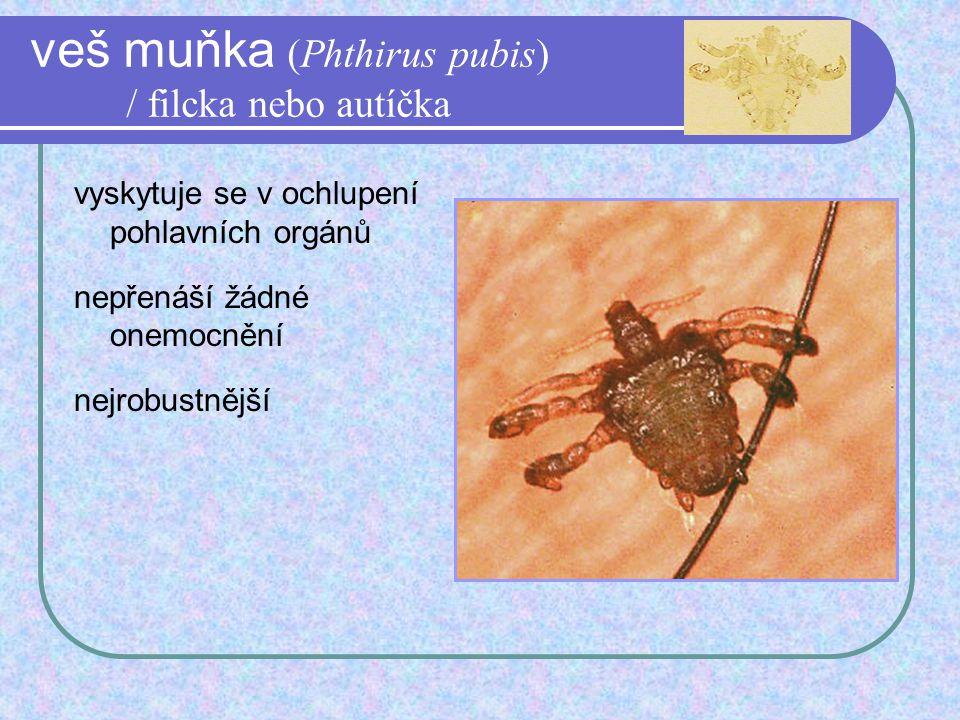 žlutá zimnice - Aedes aegypti