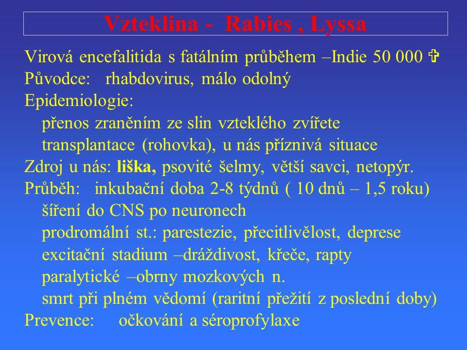 Vzteklina - Rabies, Lyssa Virová encefalitida s fatálním průběhem –Indie 50 000  Původce: rhabdovirus, málo odolný Epidemiologie: přenos zraněním ze