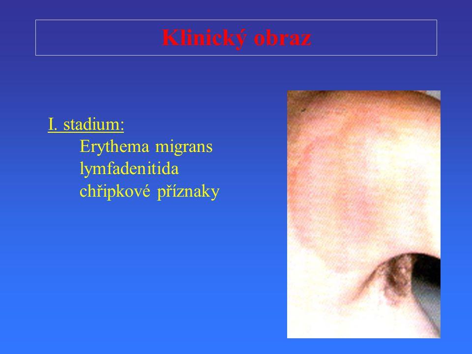 Klinický obraz I. stadium: Erythema migrans lymfadenitida chřipkové příznaky
