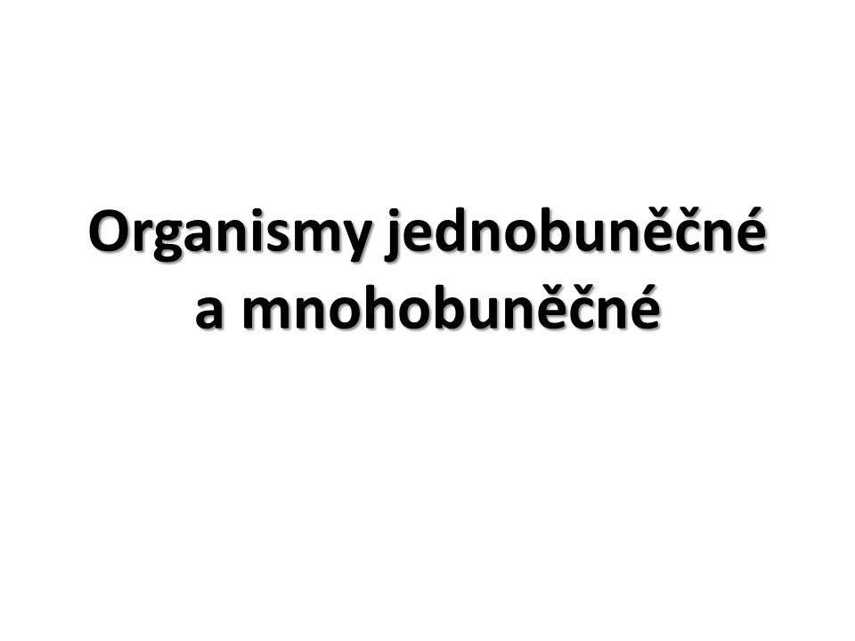 Organismy jednobuněčné tělo je tvořeno jedinou buňkou, která zajišťuje všechny životně důležité děje např.